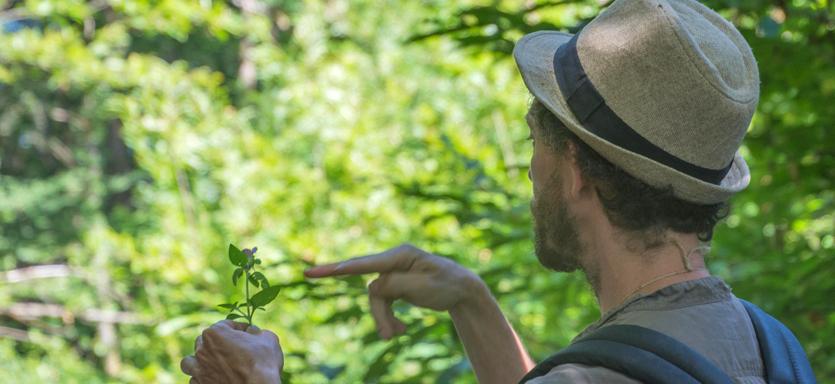 Balade botanique au Battement d'Ailes - OUMBI