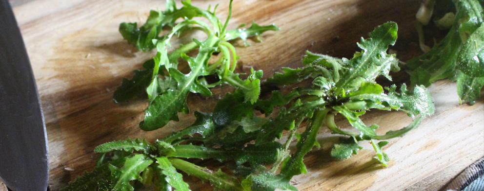 Salade sauvage - Porcelle enracinée - Cuisine OUMBI